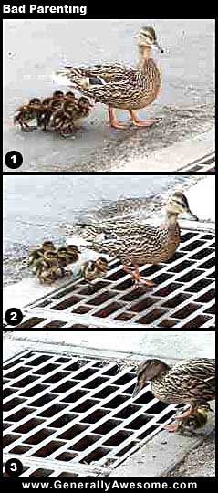 Ducklings are cute, even the ugly duckling grew up!!