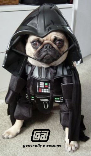 Cute little doggy is dressed up for halloween in a Darth Vader costume.  This is a cute and funny photo.!
