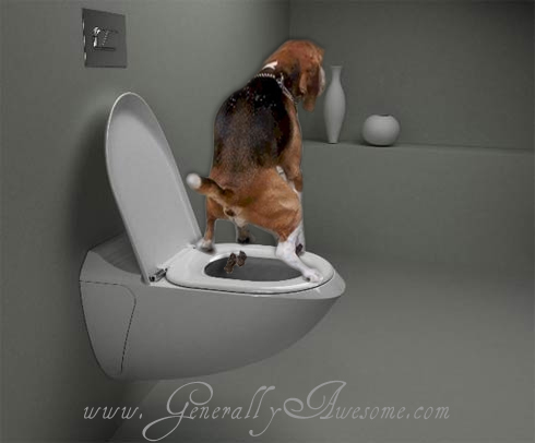 Usually dogs drink from the toilet, but this dog has found another use for the toilet.  Perhaps the best house-breaking that a dog has ever gotten.  I just wonder whether this dog still drinks from the toilet!