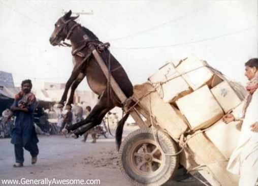 can someone help? Donkey-pulling-cart