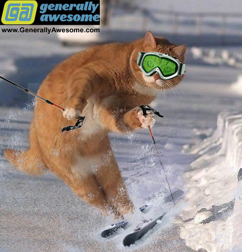 This kitten is enjoying a winter sport activity.  Funny that this cat should choose skiing. This funny cat photo was achieved with the help of photoshop. Thanks Adobe!