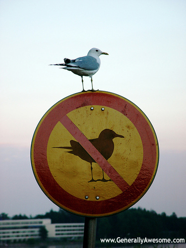 Birds have never been known to be obedient pets.  Especially wild birds like seagulls.  Also, they don't know how to read signs, like no birds allowed.  Pretty funny photo for showing how ineffective this sign is!